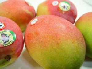 【送料無料】メキシコ産アップルマンゴー・3個入り 甘くて濃厚な味わいは絶品!国産マンゴーに匹敵する輸入最高峰マンゴー 母の日ギフト・カーネーション1本サービス 出荷予定:4月