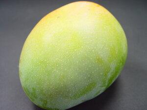 沖縄県産 キーツマンゴー 大玉1個入り 知る人ぞ知る沖縄マンゴーの名品!追熟をまって食べると美味しさは完熟マンゴーに勝る味!甘くて濃厚な味わいが絶品!しかも食感もとってもなめ