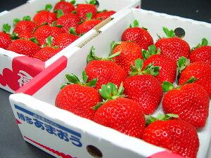 福岡県産 いちご 特選あまおう 大粒24入り  大粒でとっても食べ応えあり!独特の甘味と食味の良さが絶品! 苺 エクセレント 博多 バレンタインのプレゼントにおすすめ チョコ以