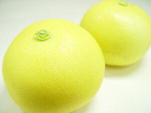 高知県産 水晶文旦 2個入り  園芸王国・高知で栽培された柑橘の名品!その爽やかな甘味と上品な味わいから「柑橘の女王」の呼ばれる文旦の最高級品種  お歳暮ギフトにおすすめ ハロ