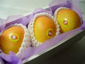 オーストラリア産 ピーチマンゴー 3個 (化粧箱入り) 冬季に輸入されるマンゴーの最高級品!甘くて濃厚な味わいが絶品! お歳暮ギフトにおすすめ 発送:12月上旬〜