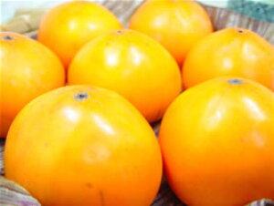 鳥取県産  花御所柿 6個   一部の地域でしか栽培されていない幻の柿! お歳暮ギフトにおすすめ 発送:12月上旬〜