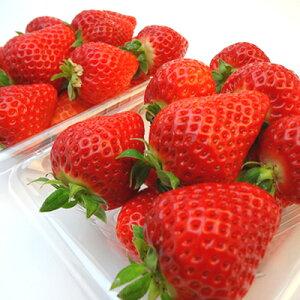 【送料無料】佐賀県産又は長崎県産 いちご ゆめのか 2パック 2007年に品種登録されたイチゴの新品種!甘くてしっかりとした食感の本格苺 ホワイトデーのギフトにおすすめ ひな祭り