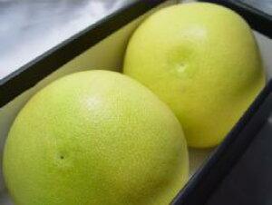 高知県産 水晶文旦 特大玉2個(化粧箱入り) 土佐で栽培された文旦の最高級品種の一つ!味の良さと品質の高さから柑橘の女王と呼ばれる逸品 お歳暮ギフトにおすすめ 出荷予定:10月上旬