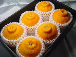 ハウス栽培 デコポン 大玉6個 (化粧箱入り)  甘くて爽やかな味わい!果汁タップリでジューシー感抜群! お年賀におすすめ バレンタインのギフトにおすすめ