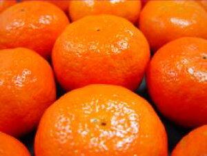 【送料無料】愛媛県産・高級柑橘 アンコール 1kg入り 知る人ぞ知る柑橘オレンジの名品!栽培量が少なく入手困難!美味しさは柑橘ツウを唸らせる実力!*北海道、沖縄への発送別途990円