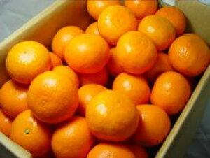 愛媛県又は三重県産 カラマンダリン 2.5kg  柑橘好きにはタマラナイ美味しさ!甘さはもちろん適度な酸味は柑橘の醍醐味を堪能できる春柑橘の逸品!
