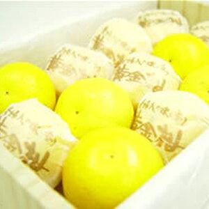 鹿児島県産 黄金柑 (化粧箱入り) 小粒だけど美味しさ抜群!希少性がとっても高い柑橘の貴婦人!