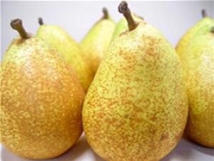 青森県産 ゼネラルレクラーク 大玉6個 化粧箱入り 黄金色に輝く洋梨の希少品種!青森で栽培がはじまった幻のデュ・コミスの自然交雑実生と言われる西洋梨の名品! お歳暮ギフトに