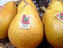 青森県産 ゼネラルレクラーク 特大6個 化粧箱入り 黄金色に輝く洋梨の希少品種!青森で栽培がはじまった幻の西洋梨…