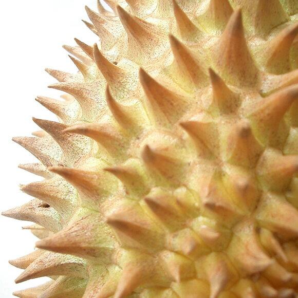 タイ産フルーツの王様ドリアン1玉