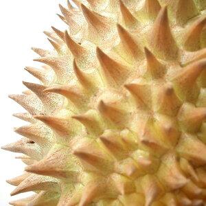 フルーツの王様ベトナム産ドリアン2玉
