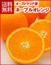 オーストラリア産ネーブルオレンジ大70玉