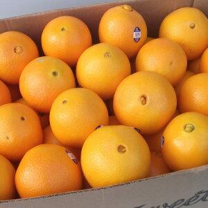 アメリカ産ネーブルオレンジ特大20玉(250g 20入)