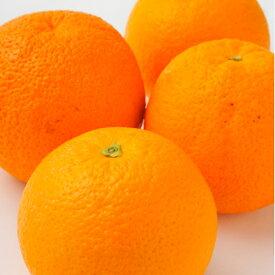 オーストラリア産オレンジ大30玉