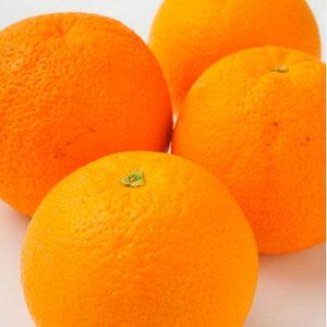 オーストラリア産オレンジ小10玉