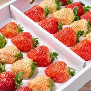 福岡・佐賀産紅白いちご24-30粒ギフト箱(あまおう&白いちご)