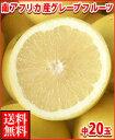 南アフリカ産グレープフルーツ白中20玉送料無料\¥3,480