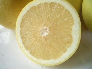 南アフリカ産グレープフルーツ白小30玉送料無料¥¥4,320