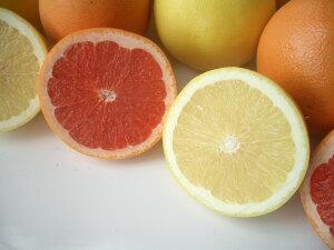 南アフリカ産紅白グレープフルーツ中10玉送料無料¥2,980