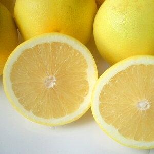 送料無料 南アフリカ産グレープフルーツ・ホワイト中玉20個グレープフルーツ アフリカ ジューシー 果肉 果汁 輸入 輸入柑橘 輸入フルーツ 柑橘 南国フルーツ 暑い夏に ひんやり デザート