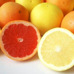送料無料 南アフリカ産グレープフルーツルビー&ホワイト10玉グレープフルーツ アフリカ ジューシー 果肉 果汁 輸入 輸入柑橘 輸入フルーツ 柑橘 南国フルーツ 暑い夏に ひんやり デザー