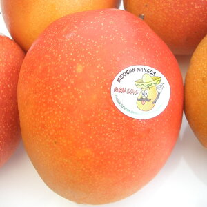 送料無料 メキシコ産アップルマンゴー(ドン・ルイス)2玉