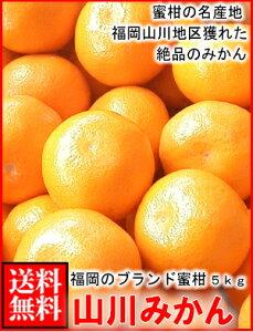 福岡産山川みかん5kg箱送料無料¥4,030
