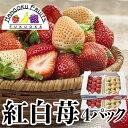 【送料無料】福岡産 紅白いちご (あまおう&白いちご)4パック