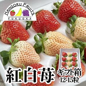 【送料無料】福岡産 紅白いちご (あまおう&白いちご)ギフト箱(12-15粒)