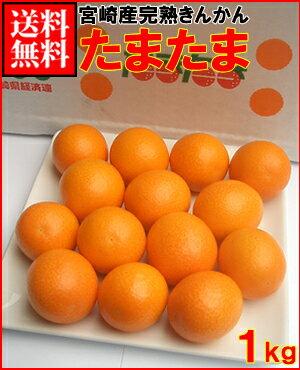 宮崎産 完熟きんかん たまたま1kg送料無料¥2,980