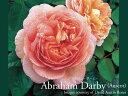 Abrahamdarby800600