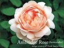 Ambridgerose800600