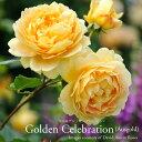 Goldencelebretion