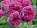 Younglycidas800