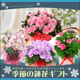 季節の鉢花 ギフト ラッピング メッセージカード 対応 プレゼント フラワーギフト クリスマス 誕生日 お正月