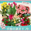 季節の鉢花ギフト 当店人気の鉢花ギフトで季節感満点の贈り物を♪【敬老の日・母の日・誕生日ギフト・結婚祝い・結婚…