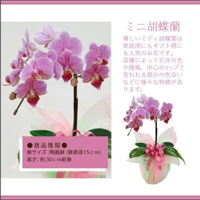 【あす楽】季節の鉢花ギフト当店人気の鉢花ギフトで季節感満点の贈り物を♪