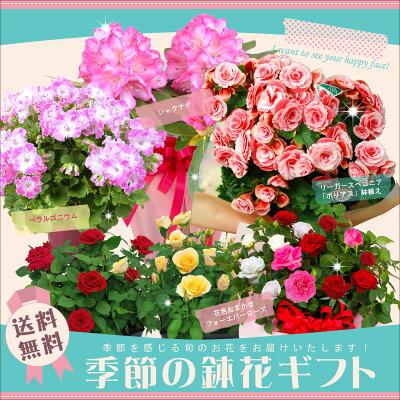【あす楽対応】季節の鉢花ギフト【楽ギフ_包装】【送料無料】