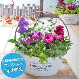 寄せ植え バスケット 玄関 店舗前の花飾りに プレゼントやギフトにもおすすめ 鉢花 花苗 選べる ガーデンシクラメン ビオラ ムスカリ パンジー
