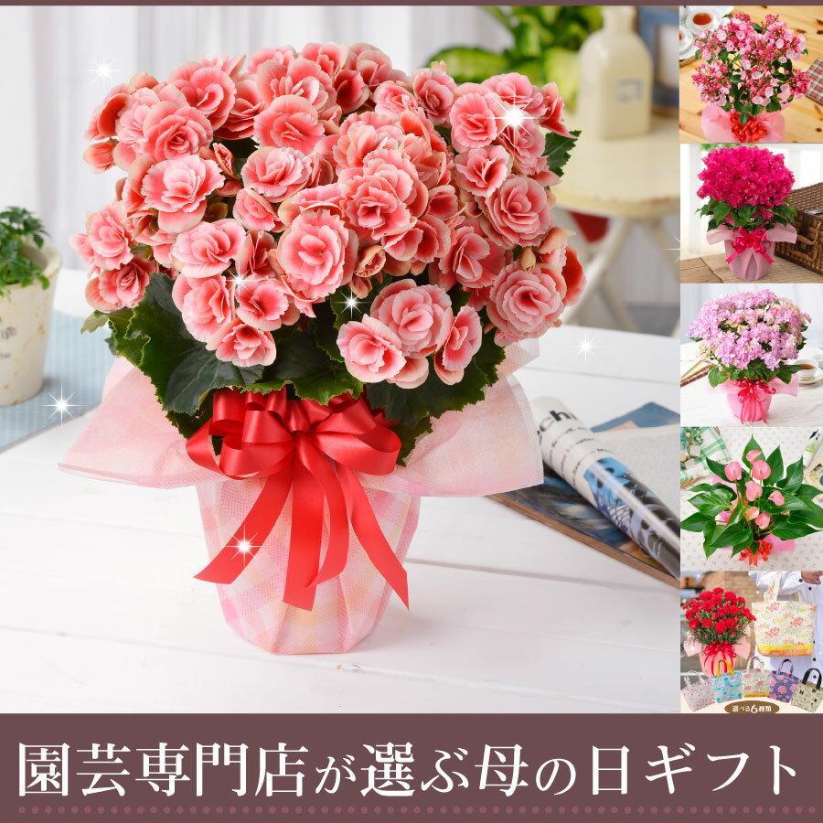 園芸専門店が選ぶ母の日ギフト・アジサイなどめずらしい季節の鉢花やカーネーションとトートバックのセットも選べる