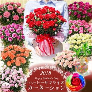 【母の日ギフト】早期特典カーネーション鉢植えギフト!選...