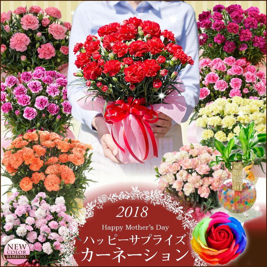 【母の日ギフト】早期特典カーネーション鉢植えギフト!選べる花色とお母さんも大満足の幸せ特典がいっぱい