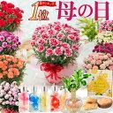 遅れてゴメンね 母の日 プレゼント カーネーション 花色おまかせ鉢植え ギフト とおまかせ幸せ特典