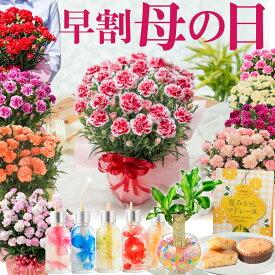 母の日 プレゼント カーネーション 鉢植え 早割 ギフト 選べる10種の花色 赤 ピンク オレンジ パープル イエロー 変り咲き 香り と選べる幸せ特典 幸福の木 ハーバリウム ディフューザー 花とスイーツのセットもさらに 実用的な お花のカレンダ—特典あり