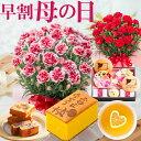 母の日 プレゼント カーネーション 花とスイーツ プレゼント ギフト お菓子付き ハートレモンティ 骨鶏カステラ 桐葉…