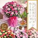 54位:母の日ギフト2色咲きコンビネーション!カーネーション鉢植えと幸福の木のセット
