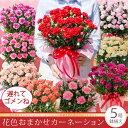 【遅れてゴメンね】母の日ギフト花色おまかせカーネーション鉢植えギフト!