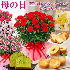遅れてゴメンね 母の日 プレゼント 花色おまかせ カーネーション とおまかせお菓子のセット 花とスイーツ 2