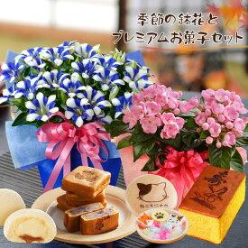 敬老の日ギフト プレゼント 季節の鉢花とプレミアムスイーツセット におい桜 リンドウ白寿 カステラ ねこもなか 桐葉菓 月でひろった卵